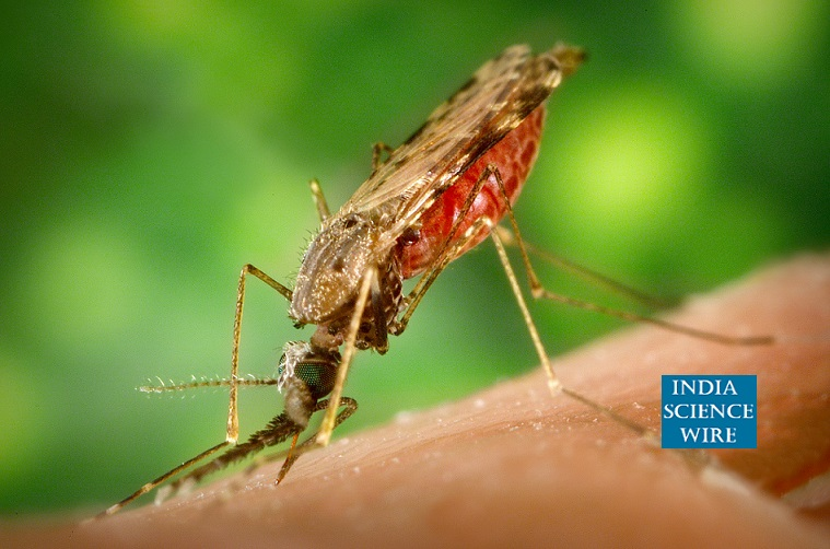 Reduction in malaria cases still India carries huge burden--India Science Wire